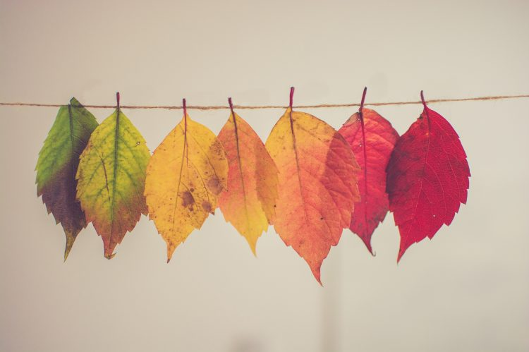 colorful leaves hanging on a line